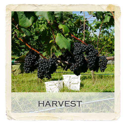 gallery-feature-harvest