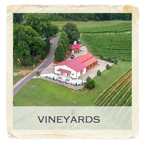 gallery-feature-vineyard