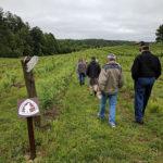 People walking through vineyard.