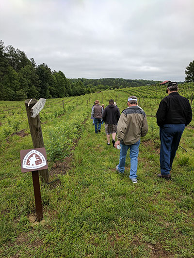 People walking through vineyard.