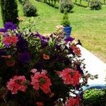 Flowers and vineyard.
