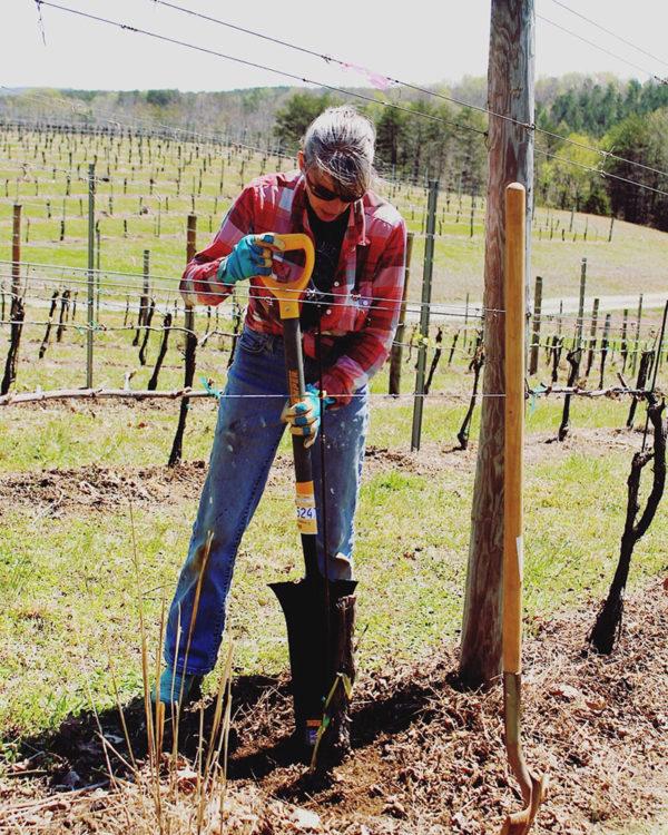 Planting new Petit Manseng vines.